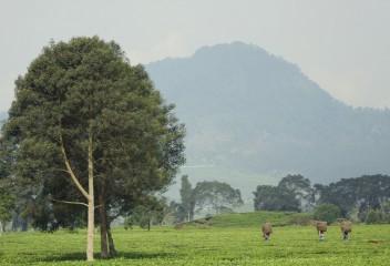 Malabar Tea Walk