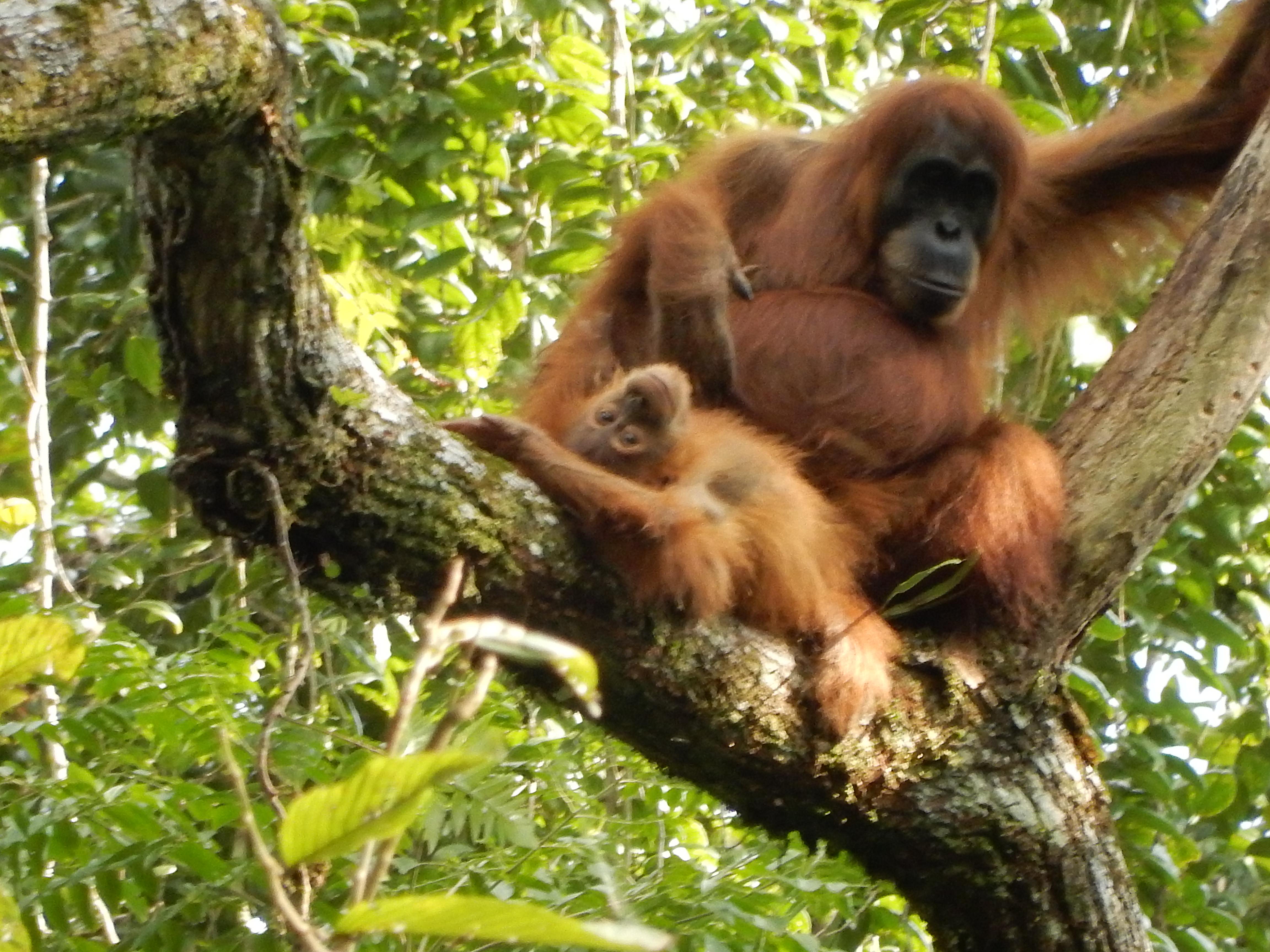Open Trip Adventure Sumatera 9D8N